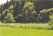 青森県上北郡東北町大字大浦字榎谷地21番19 農地 物件写真