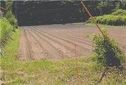 青森県上北郡東北町大字大浦字助十郎崎103番120 農地 物件写真