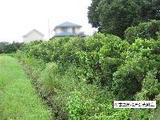静岡県袋井市松原字八幡西307番 土地 物件写真