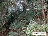 愛知県豊橋市岩崎町字米山1番75 土地 物件写真