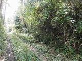 栃木県那須郡那須町大字芦野字西林1466番201 土地 物件写真
