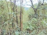 高知県土佐市高岡町字茶園丁864番 農地 物件写真
