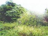 沖縄県うるま市字具志川加天良原2659番 土地 物件写真