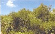沖縄県国頭郡本部町字瀬底前原3286番1 農地 物件写真