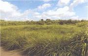 沖縄県国頭郡本部町字瀬底和名原4874番 農地 物件写真