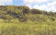 沖縄県国頭郡本部町字瀬底前久保原4558番 土地 物件写真