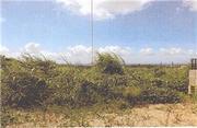 沖縄県国頭郡本部町字瀬底前久保原4555番 土地 物件写真