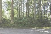 新潟県柏崎市大字山澗字津倉田311番1 土地 物件写真