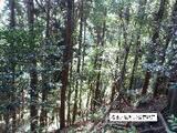 三重県津市安濃町今徳字東前山538番1 土地 物件写真