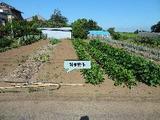 千葉県印旛郡栄町矢口字大船戸1286番 土地 物件写真