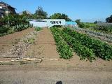 千葉県印旛郡栄町矢口字大船戸1285番2 土地 物件写真