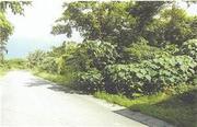 沖縄県石垣市字野底東田原1117番 農地 物件写真