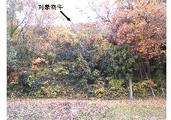 茨城県常陸太田市花房町字カブレヤツ2321番 土地 物件写真