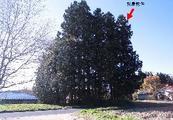 福島県西白河郡西郷村大字米字西原99番地5 土地 物件写真