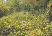 山梨県中央市浅利字七蔵2221番1 農地 物件写真