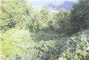 新潟県柏崎市大字与板字兵坂入334番 土地 物件写真