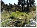 三重県伊賀市西高倉字青田山4988番91 土地 物件写真