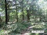 栃木県那須郡那須町大字豊原乙字那須道下660番233 土地 物件写真