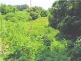 宮崎県延岡市天下町1257番 農地 物件写真