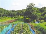 宮崎県延岡市天下町1213番381 農地 物件写真