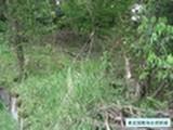 静岡県伊東市宇佐美字桜山3368番36 土地 物件写真