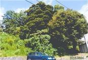 静岡県伊東市富戸字上野1012番58 土地 物件写真